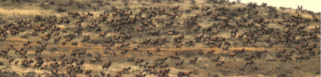 186 Days Of Elk Hunting featured image.