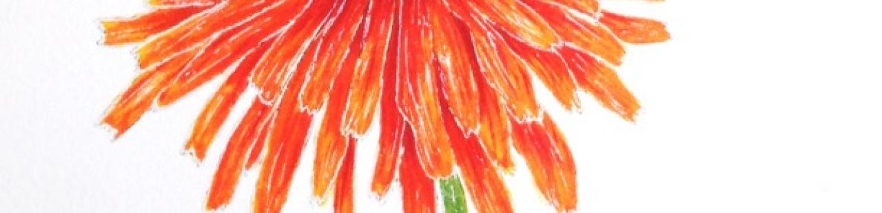Orange Agoseris featured image.
