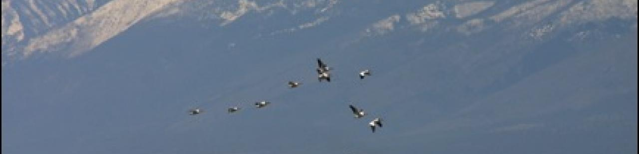 Raptor Migration 2013 Update 7 featured image.