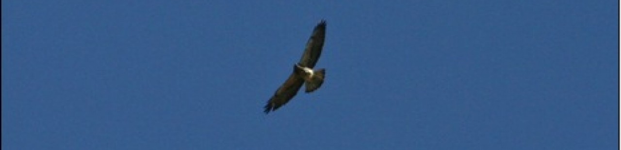 2013 Spring Raptor Survey Comes To A Close   featured image.