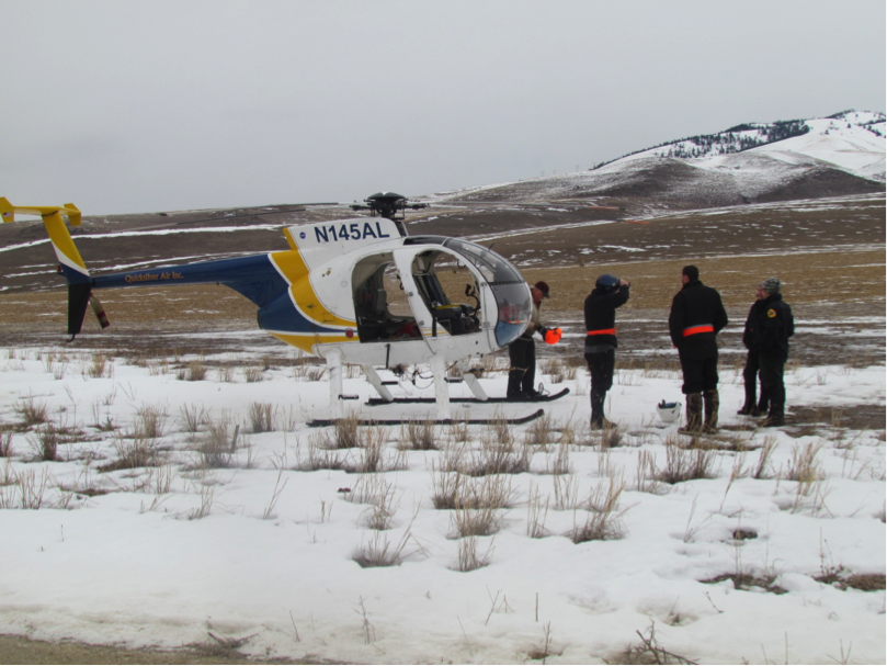 The helicopter crew discussed their plan of action in detail. After netting an elk, biologists would jump out and use hobbles stored around their waists to immobilize the animal.