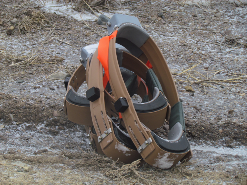 These radio collars waited for pick-up by the helicopter crew. The orange flagging indicated a collar sized for a bull elk. During the rut, bulls' necks swell, so the collars must accommodate this.