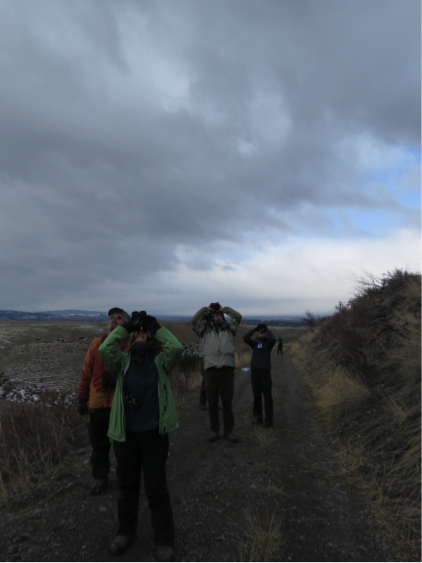 A pair of Golden Eagles overhead draws the attention of birders. Photo Kate Stone.