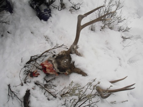 This photo shows what little remained of the deer's skull.