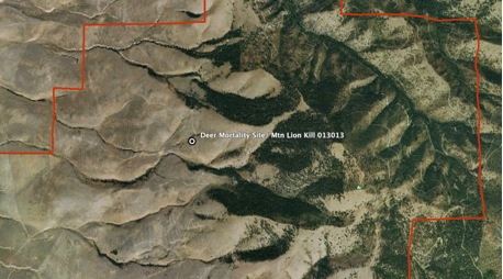 The map shows the location of the mountain lion kill site. The red line indicates the MPG Ranch boundary.