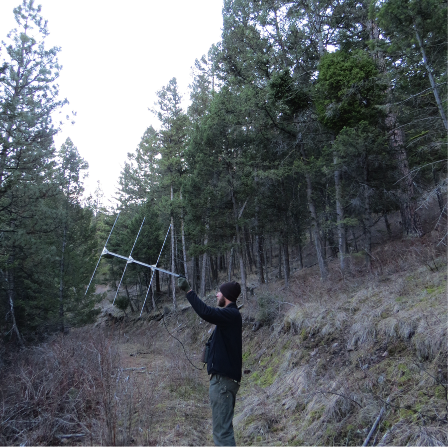 3/13/15: Kate Stone and I look for male #960 at 9:00 am, and find it ten minutes later in a Douglas-fir. The owl is 30 centimeters away from the trunk of the tree.