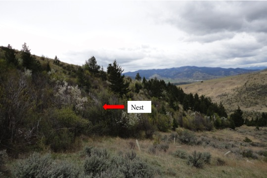 Owl nest location