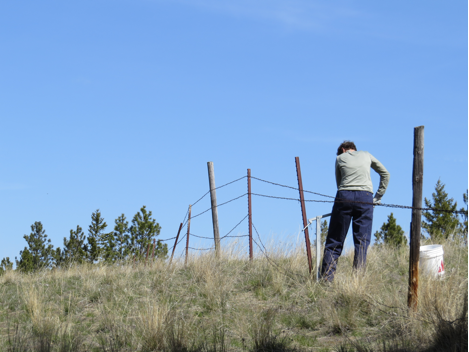 A volunteer removes a metal t-posts that are a component of many ranch fences.