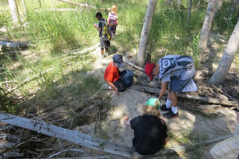 We looked at tracks in the sand left behind by the spring meltwater and then discovered the recent beaver activity along the Bitterroot River.