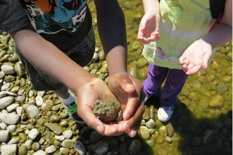 Students spent time along the river catching and releasing toads. All the toads returned to the water unharmed.