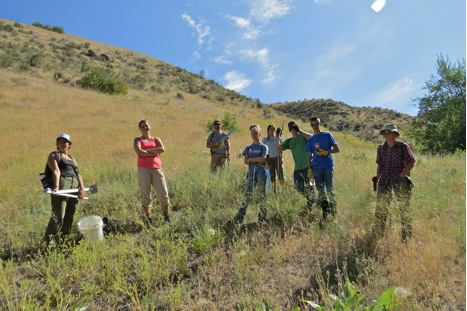 The summer interns all joined forces this week for an epic day of fence removal. The high school field crew spent the bulk of their w eek collecting seeds, but joined with Katharine's interns on Wednesday to pull the last remaining barbed wire out of Tongue Creek.