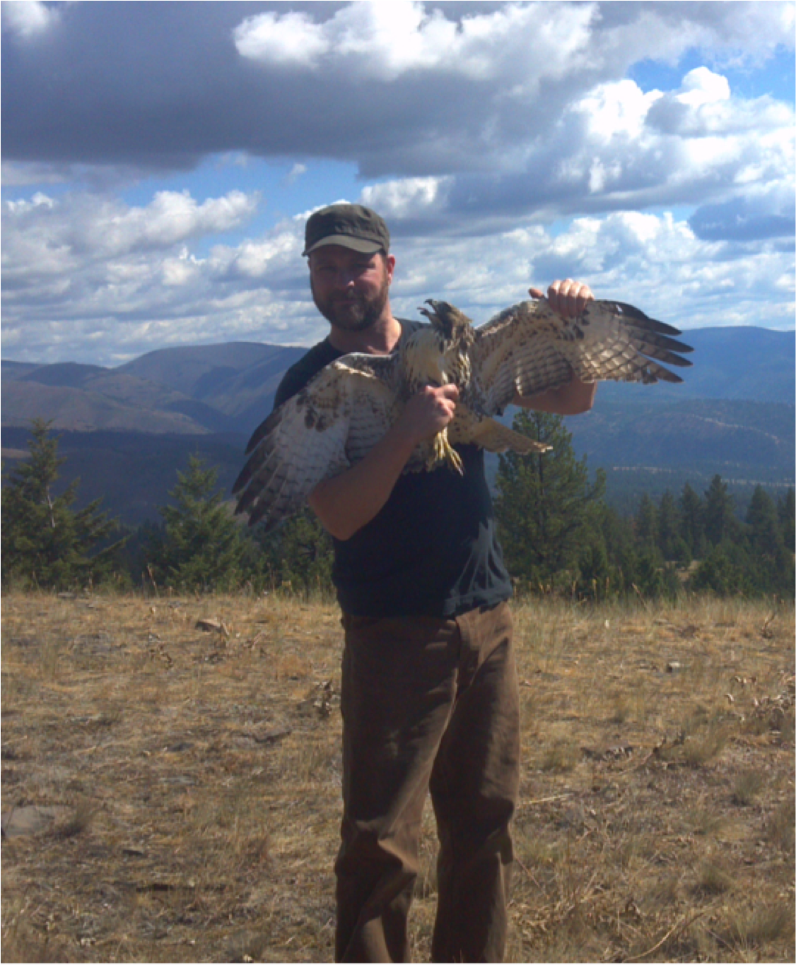 Eric holds the first raptor capture of the season: a feisty Red-tailed Hawk (RVRI photo).