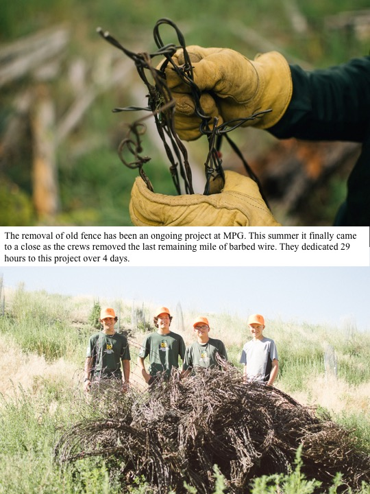 The removal of old fence has been an ongoing project at MPG. This summer it finally came to a close as the crews removed the last remaining mile of barbed wire. They dedicated 29 hours to this project over 4 days.