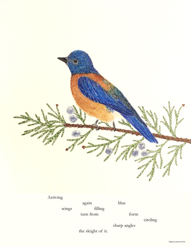 Mountain Bluebird and Juniper