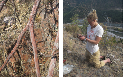 Orange retardant is visible on rocks and logs as Abigail Marshal samples plants.