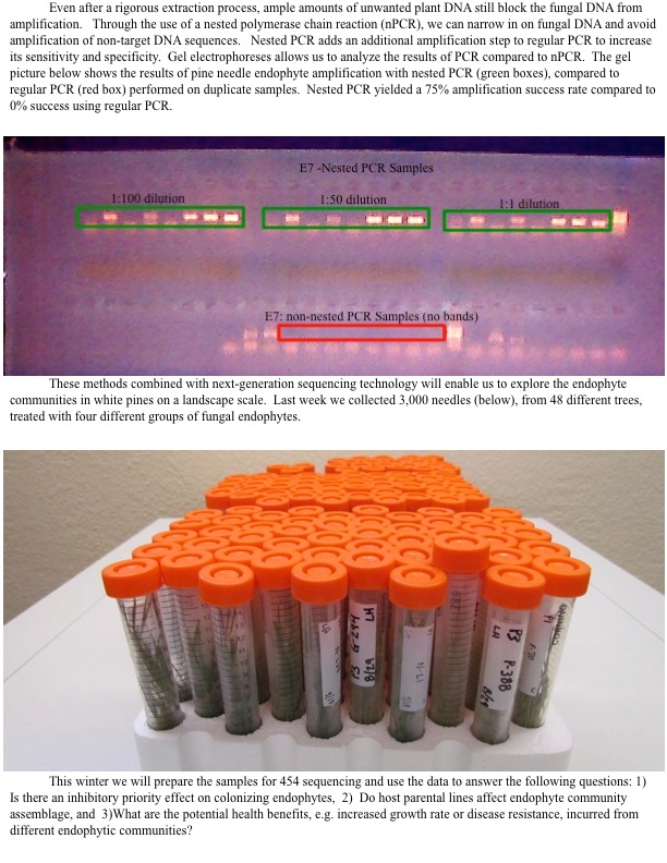 Nested PCR yields greater amplification success.
