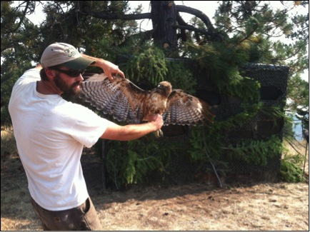 Adam shreading with a red-tailed hawk.