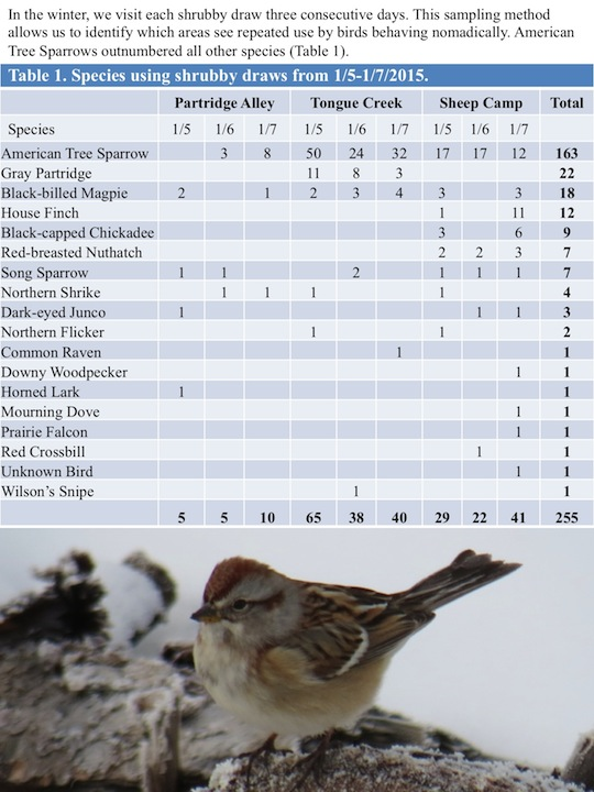 In the winter, we visit each shrubby draw three consecutive days. This sampling method allows us to identify which areas see repeated use by birds behaving nomadically. American Tree Sparrows outnumbered all other species (Table 1)