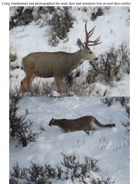 Craig Jourdonnais had photographed the mule deer and mountain lion several days earlier.