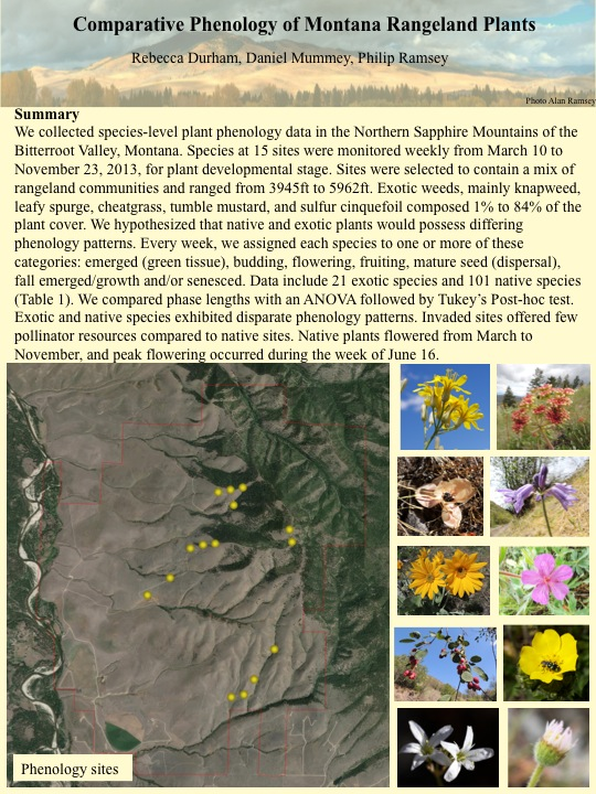 We collected species-level plant phenology data in the Northern Sapphire Mountains of the Bitterroot Valley, Montana. Species at 15 sites were monitored weekly from March 10 to November 23, 2013, for plant developmental stage.