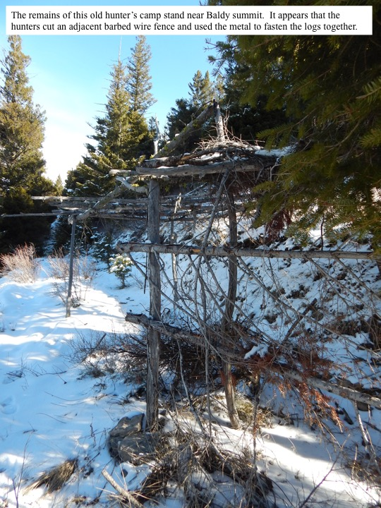 The remains of this old hunter's camp stand near Baldy summit. It appears that the hunters cut an adjacent barbed wire fence and used the metal to fasten the logs together.