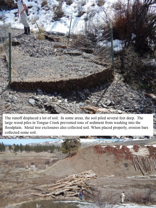 The runoff displaced a lot of soil. In some areas, the soil piled several feet deep. The large wood piles in Tongue Creek prevented tons of sediment from washing into the floodplain. Metal tree exclosures also collected soil. When placed properly, erosion bars collected some soil.