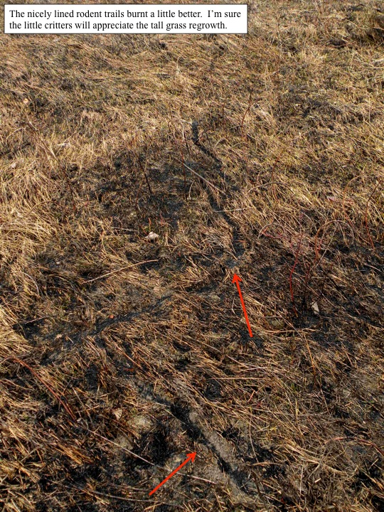 mice trails evident after burn