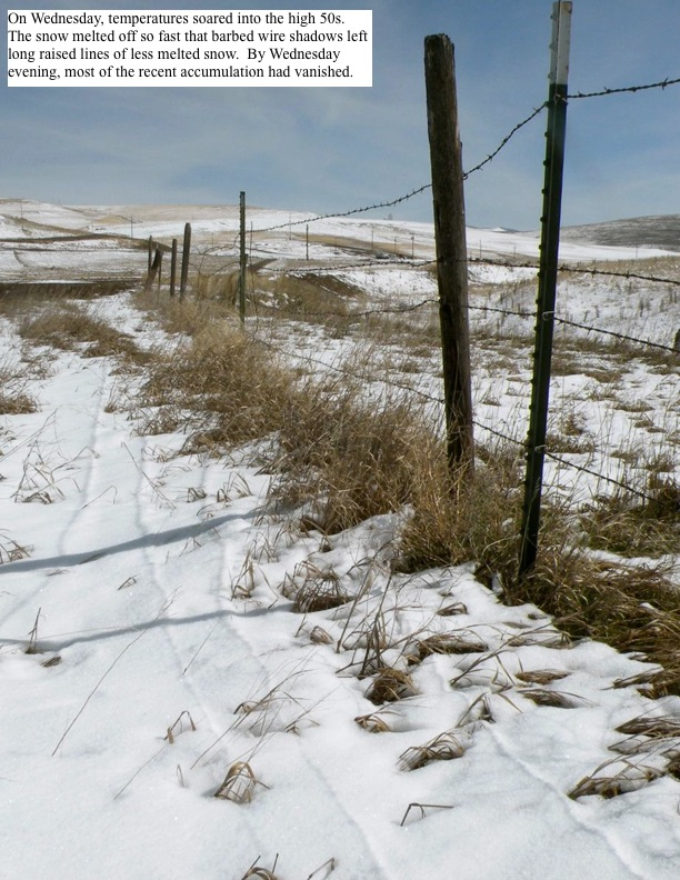 On Wednesday, temperatures soared into the high 50s. The snow melted off so fast that barbed wire shadows left long raised lines of less melted snow. By Wednesday evening, most of the recent accumulation vanished.