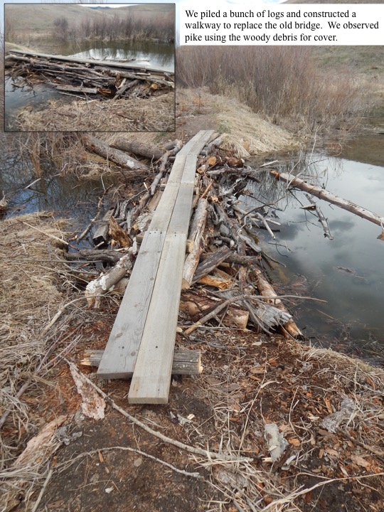 We piled a bunch of logs and constructed a walkway to replace the old bridge. We observed pike using the woody debris for cover.