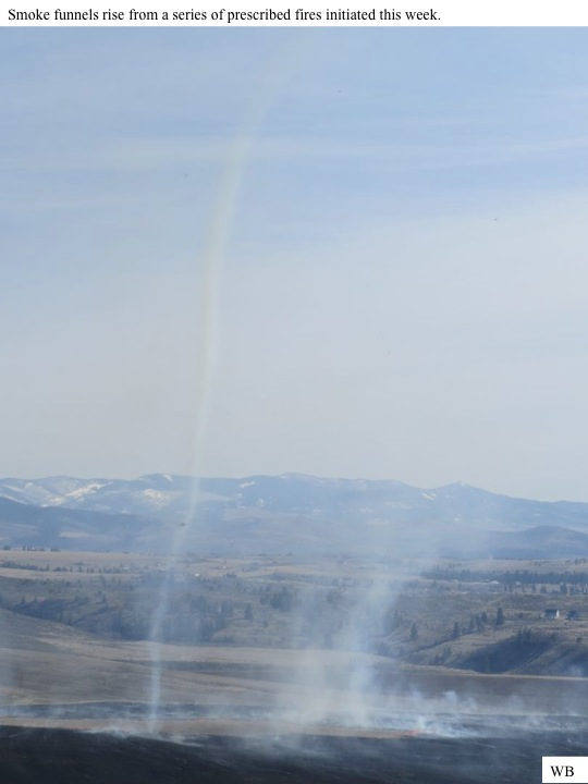 Smoke funnels rise from a series of prescribed fires initiated this week.
