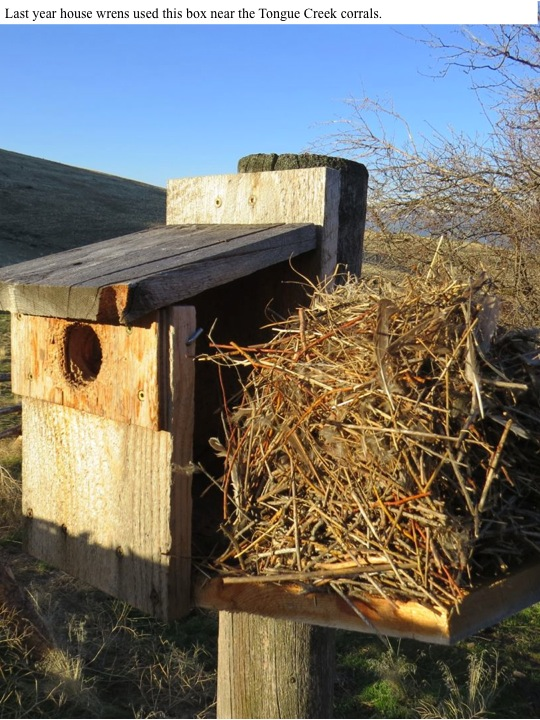 Last year house wrens used this box near the Tongue Creek corrals.