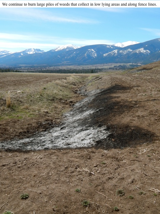 We continue to burn large piles of weeds that collect in low lying areas and along fence lines.