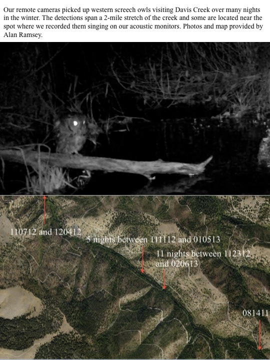 Our remote cameras picked up western screech owls visiting Davis Creek over many nights in the winter. The detections span a 2-mile stretch of the creek and some are located near the spot where we recorded them singing on our acoustic monitors. Photos and map provided by Alan Ramsey.