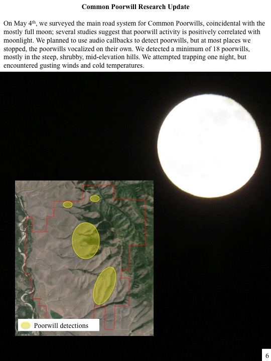 On May 4th, we surveyed the main road system for Common Poorwills, coincidental with the mostly full moon; several studies suggest that poorwill activity is positively correlated with moonlight. We planned to use audio callbacks to detect poorwills, but at most places we stopped, the poorwills vocalized on their own. We detected a minimum of 18 poorwills, mostly in the steep, shrubby, mid-elevation hills. We attempted trapping one night, but encountered gusting winds and cold temperatures.