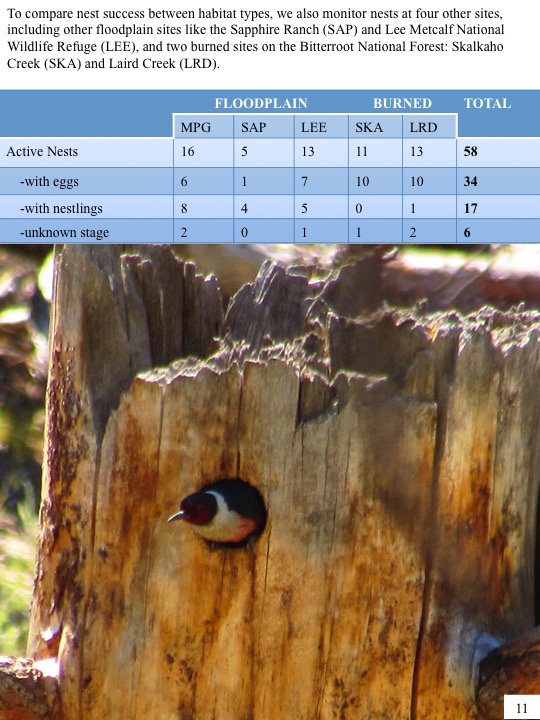 To compare nest success between habitat types, we also monitor nests at four other sites, including other floodplain sites like the Sapphire Ranch (SAP) and Lee Metcalf National Wildlife Refuge (LEE), and two burned sites on the Bitterroot National Forest: Skalkaho Creek (SKA) and Laird Creek (LRD).