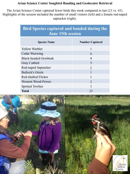 Avian Science Center Songbird Banding and Geolocator Retrieval