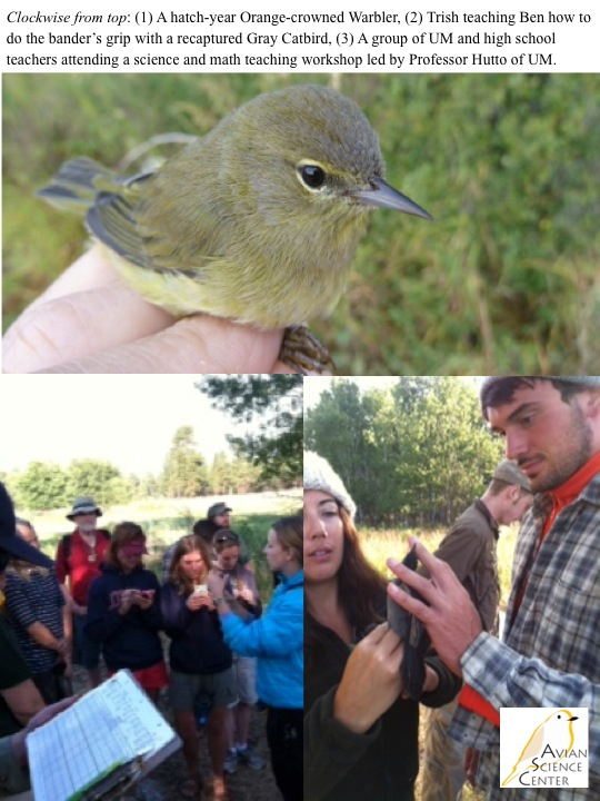 Clockwise from top: (1) A hatch-year Orange-crowned Warbler, (2) Trish teaching Ben how to do the bander's grip with a recaptured Gray Catbird, (3) A group of UM and high school teachers attending a science and math teaching workshop led by Professor Hutto of UM.