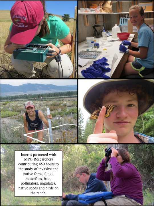 Interns partnered with MPG Researchers contributing 450 hours to the study of invasive and native forbs, fungi, butterflies, bats, pollinators, ungulates, native seeds and birds on the ranch.