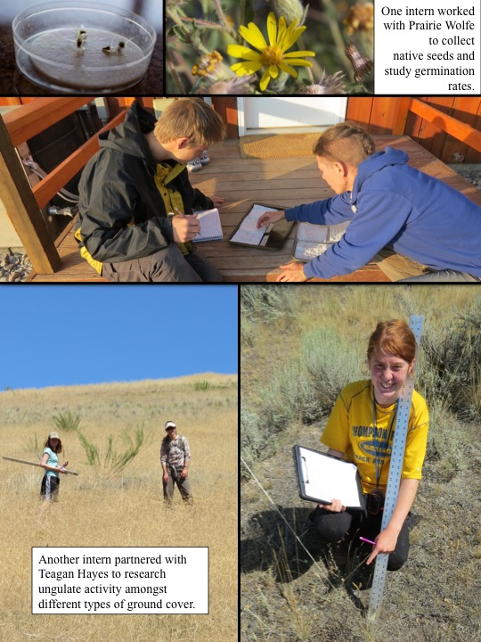 One intern worked with Prairie Wolfe to collect native seeds and study germination rates.