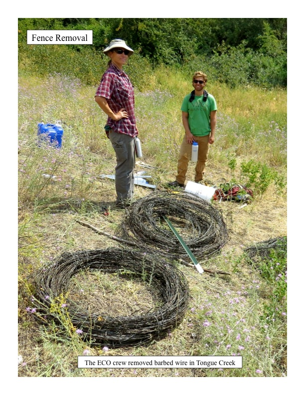 The ECO crew removed barbed wire in Tongue Creek