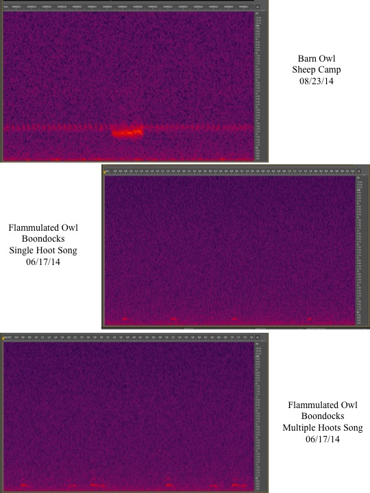Owl Audio Monitoring