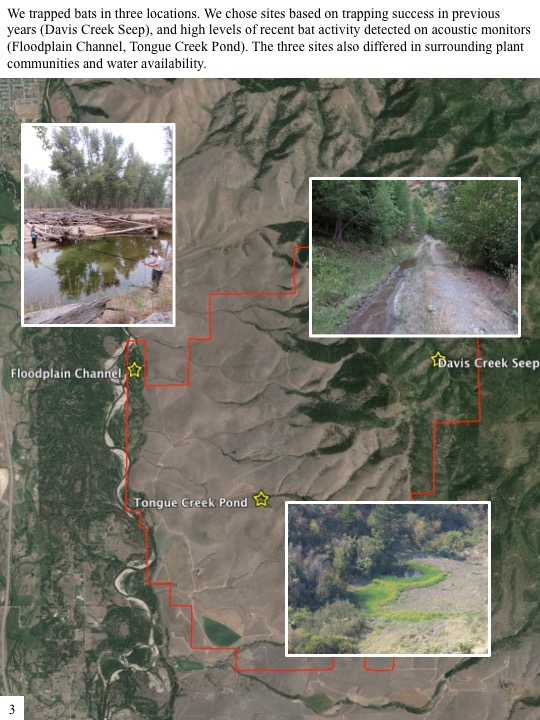 We trapped bats in three locations. We chose sites based on trapping success in previous years (Davis Creek Seep), and high levels of recent bat activity detected on acoustic monitors (Floodplain Channel, Tongue Creek Pond). The three sites also differed in surrounding plant communities and water availability.