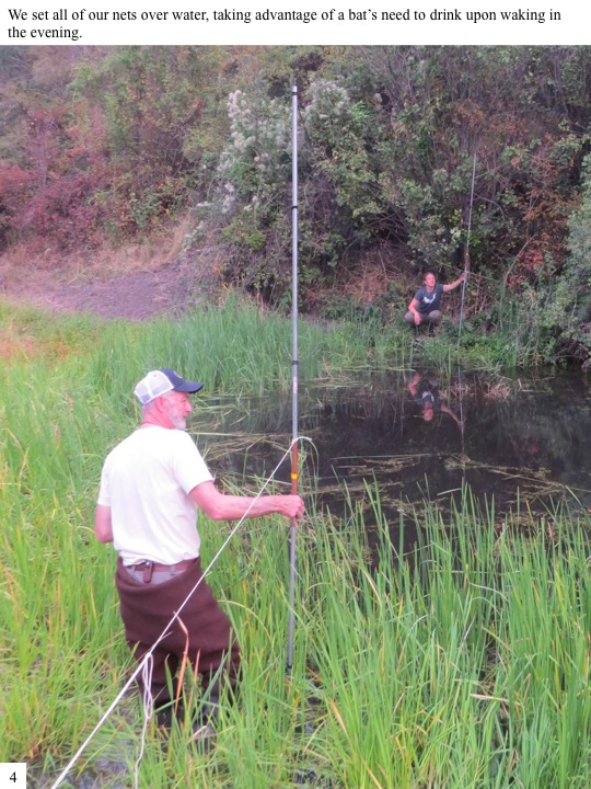 We set all of our nets over water, taking advantage of a bat's need to drink upon waking in the evening.
