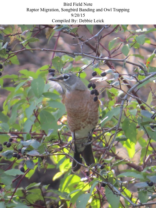 Bird Field Note Raptor Migration, Songbird Banding and Owl Trapping 9/20/15 Compiled By: Debbie Leick