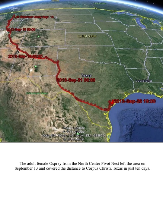 The adult female Osprey from the North Center Pivot Nest left the area on September 13 and covered the distance to Corpus Christi, Texas in just ten days.