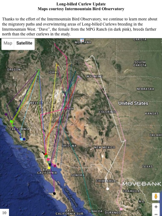 "Thanks to the effort of the Intermountain Bird Observatory, we continue to learn more about the migratory paths and overwintering areas of Long-billed Curlews breeding in the Intermountain West. ""Dave"", the female from the MPG Ranch (in dark pink), breeds farther north than the other curlews in the study"