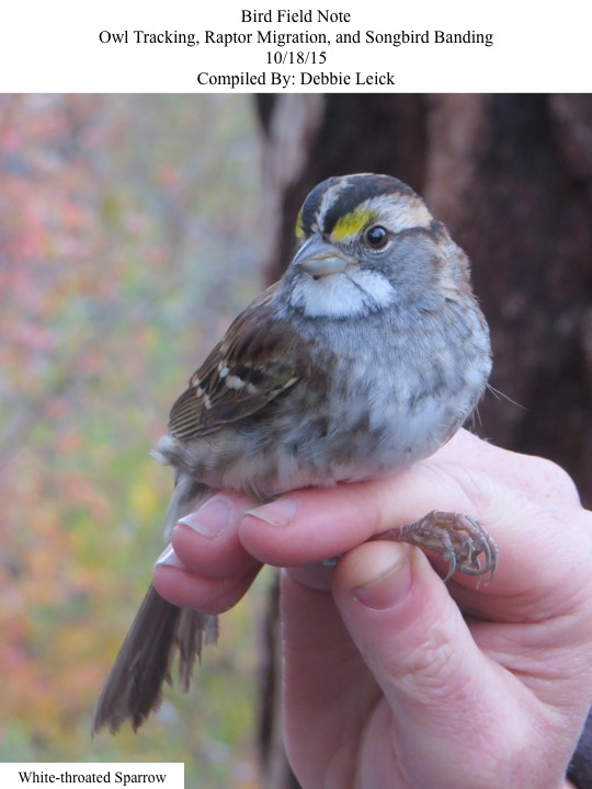 Bird Field Note Owl Tracking, Raptor Migration, and Songbird Banding 10/18/15 Compiled By: Debbie Leick