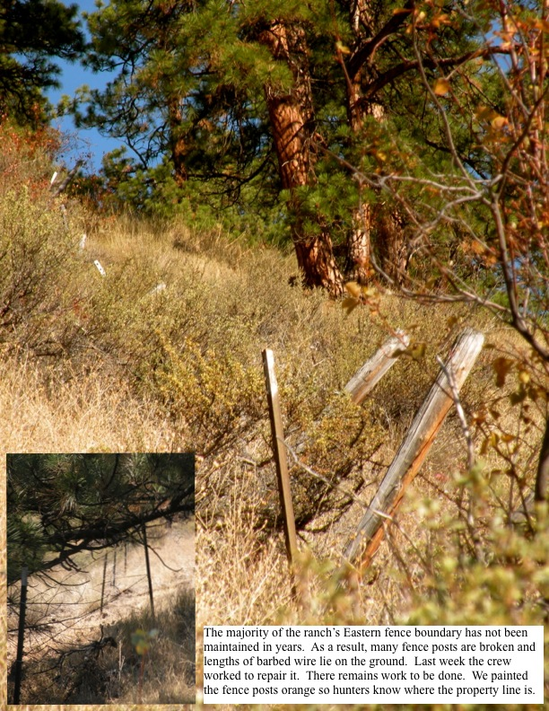 The majority of the ranch's Eastern fence boundary has not been maintained in years. As a result, many fence posts are broken and lengths of barbed wire lie on the ground. Last week the crew worked to repair it. There remains work to be done. We painted the fence posts orange so hunters know where the property line is.