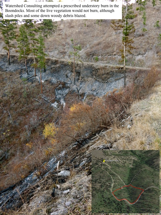 Watershed Consulting attempted a prescribed understory burn in the Boondocks. Most of the live vegetation would not burn, although slash piles and some down woody debris blazed.
