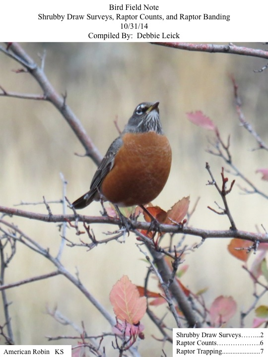 Bird Field Note Shrubby Draw Surveys, Raptor Counts, and Raptor Banding 10/31/14 Compiled By: Debbie Leick